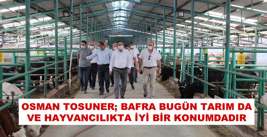 Osman Tosuner, Bafra Bugün Tarım Da Ve Hayvancılıkta İyi Bir Konumdadır''