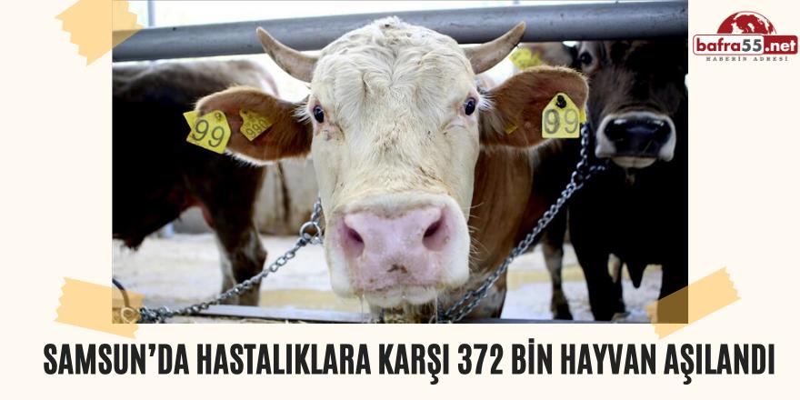 Samsun'da Hastalıklara karşı 372 Bin Hayvan Aşılandı