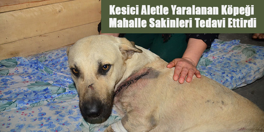 Kesici Aletle Yaralanan Köpeği Mahalle Sakinleri Tedavi Ettirdi