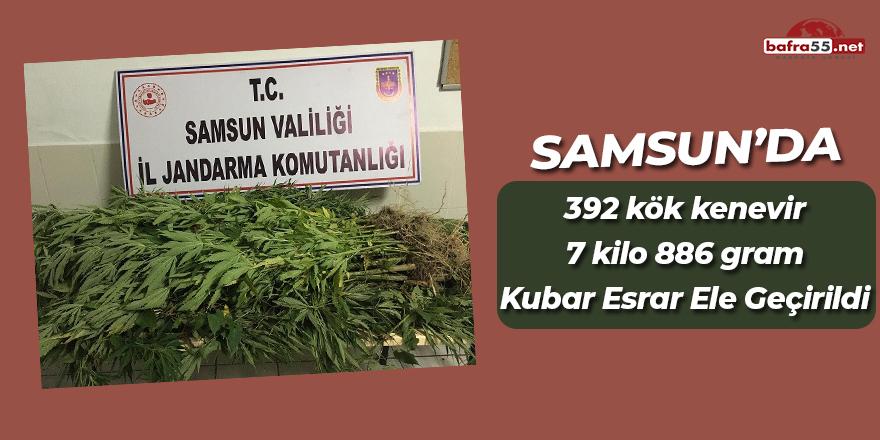 Samsun'da 392 kök kenevir 7 kilo 886 gram kubar esrar ele geçirildi