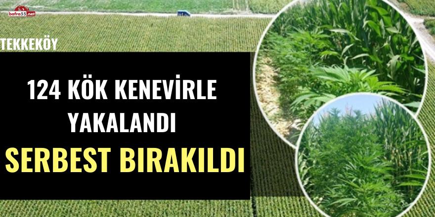 Samsun'da Kenevirle Yakalanan Şahıs Serbest Bırakıldı