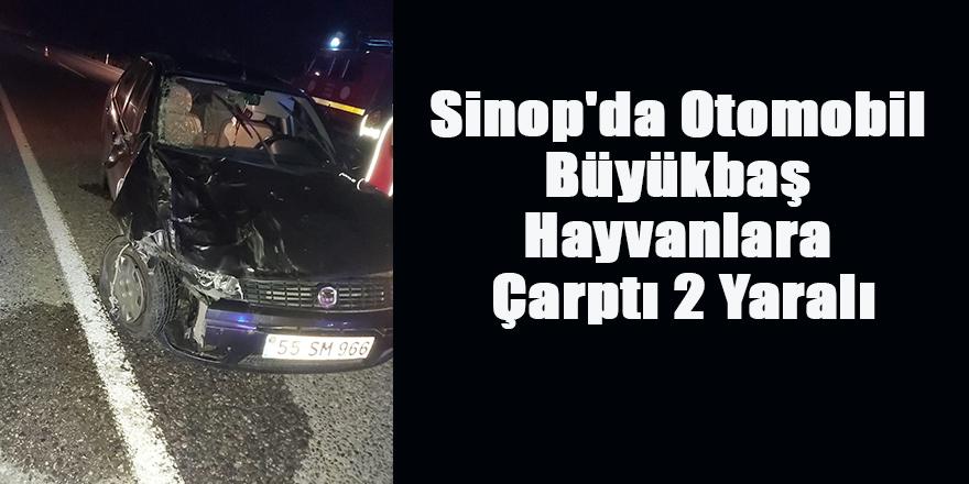 Sinop'da Otomobil Büyükbaş Hayvanlara Çarptı 2 Yaralı