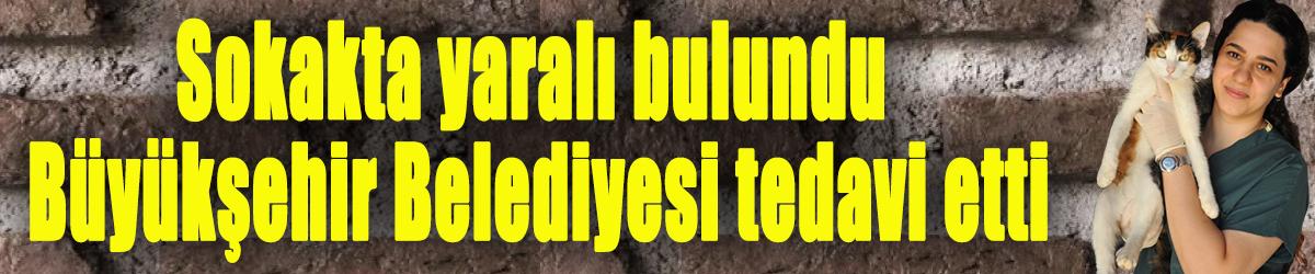 Sokakta yaralı bulundu, Büyükşehir Belediyesi tedavi etti