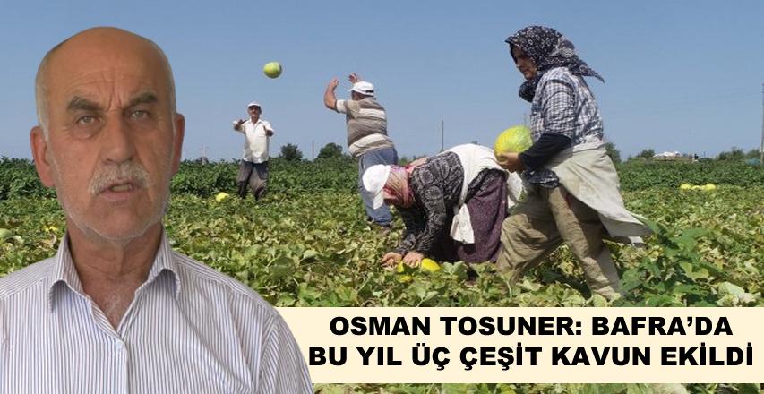 Osman Tosuner, Bafra 'da bu Yıl Üç Çeşit Kavun Ekildi