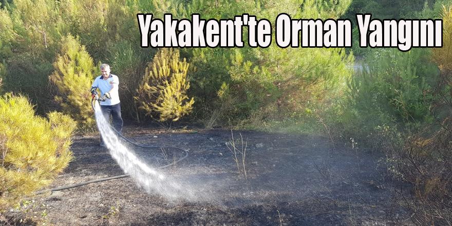 Çam gölünde  Orman Yangını