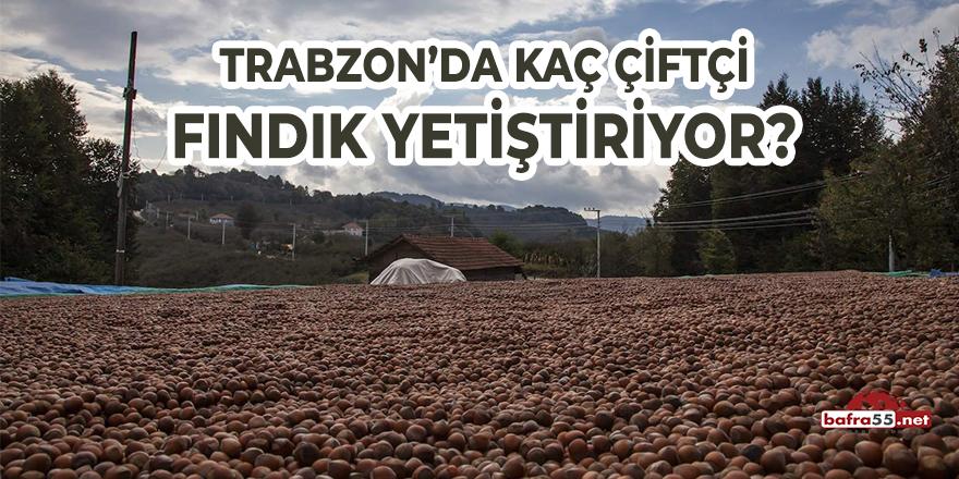 Trabzon'da Kaç Çiftçi Fındık Yetiştiriyor?