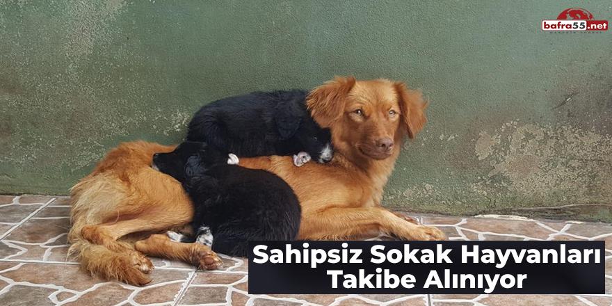 Sahipsiz Sokak Hayvanları Takibe Alınıyor