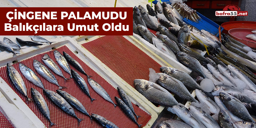 Çingene Palamudu Balıkçılara Umut Oldu