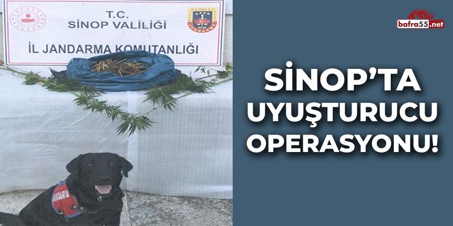Sinop'ta Uyuşturucu Operasyonu!