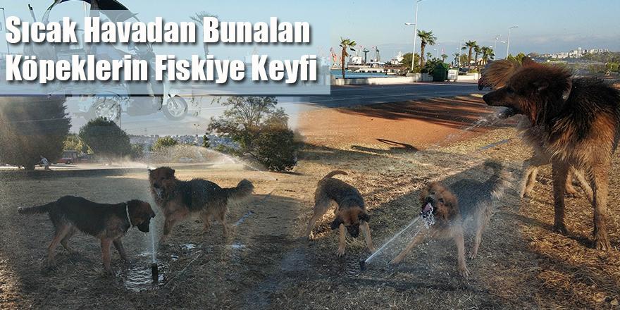 Sıcak Havadan Bunalan Köpeklerin Fiskiye Keyfi