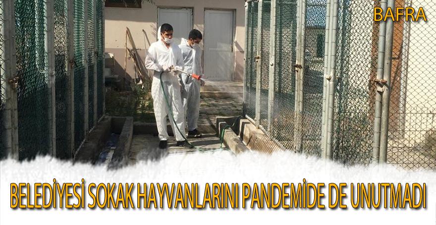 Bafra Belediyesi sokak hayvanlarını pandemide de unutmadı