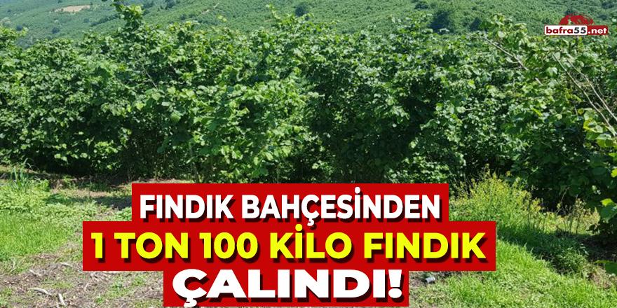 Fındık Bahçesinden 1 Ton 100 Kilo Fındık Çalındı!