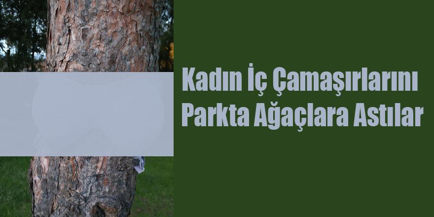 Kadın İç Çamaşırlarını Parkta Ağaçlara Astılar