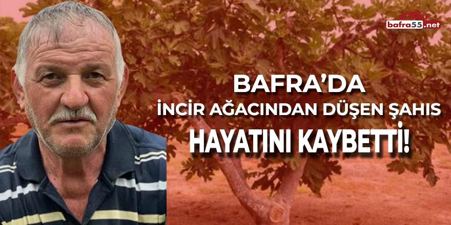 Bafra'da İncir Ağacından Düşen Şahıs Hayatını Kaybetti!