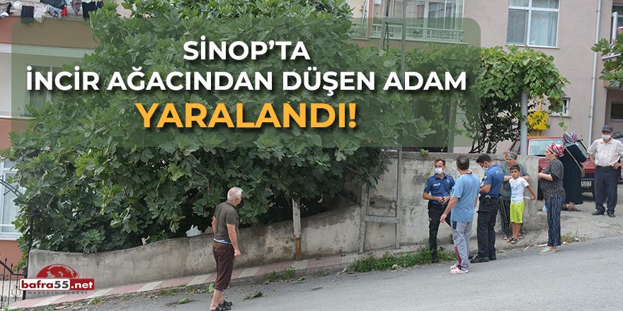 Sinop'ta İncir Ağacından Düşen Adam Yaralandı!