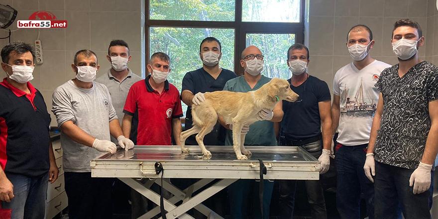 Yaralı Köpek 1 Ayda Tedavi Edildi