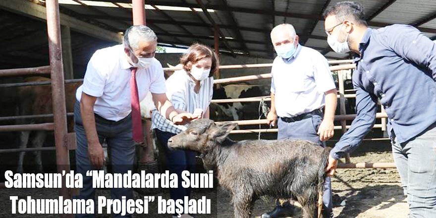 """Samsun'da """"Mandalarda Suni Tohumlama Projesi"""" başladı"""
