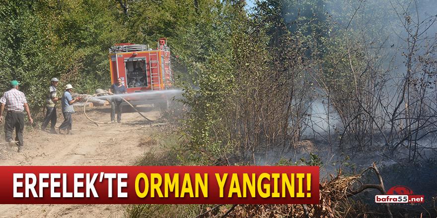 Erfelek'te orman yangını!