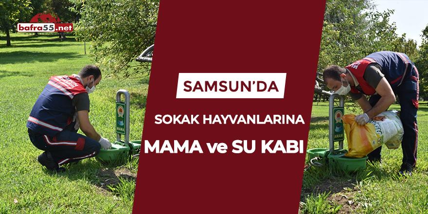 Samsun'da sokak hayvanlarına mama ve su kabı