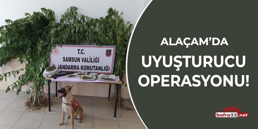 Alaçam'da uyuşturucu operasyonu!
