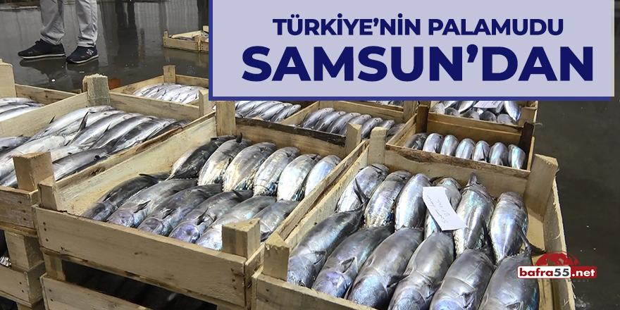 Türkiye'nin palamudu Samsun'dan