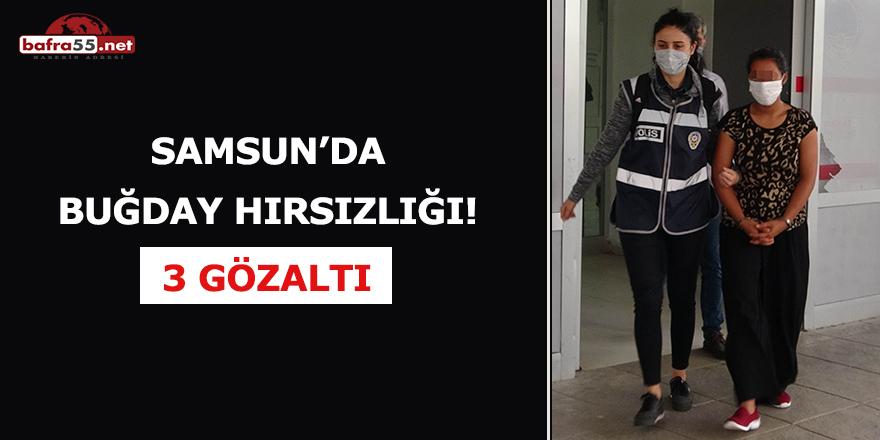 Samsun'da buğday hırsızlığı! 3 gözaltı