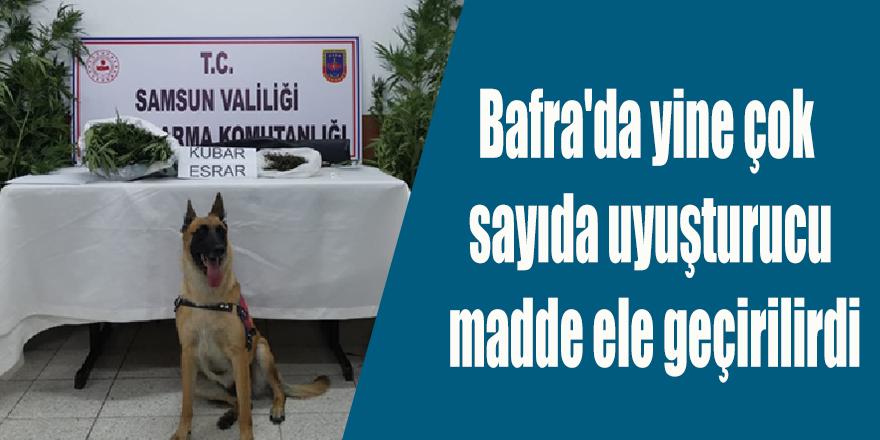 Bafra'da yine çok sayıda uyuşturucu madde ele geçirilirdi