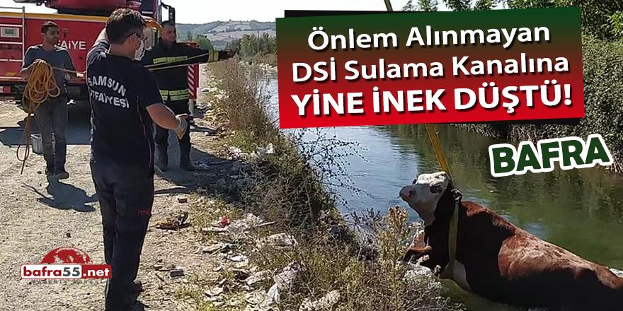 Önlem alınmayan DSİ sulama kanalına yine inek düştü