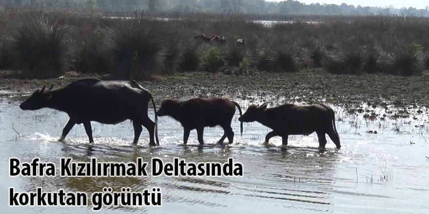 Bafra Kızılırmak Deltasında korkutan görüntü