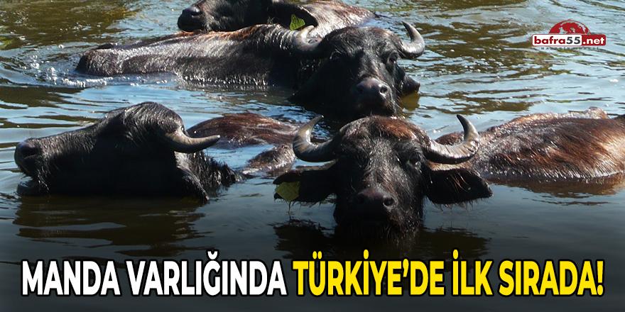 Manda varlığında Türkiye'de ilk sırada!