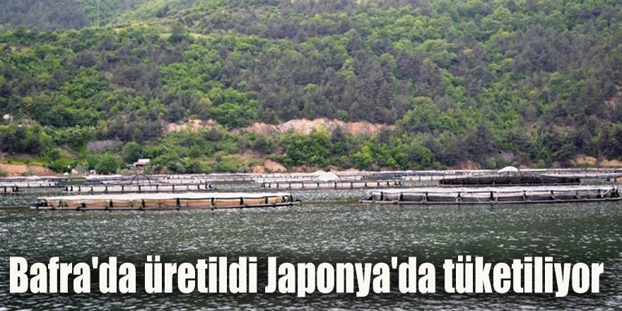 Bafra'da üretildi Japonya'da tüketiliyor