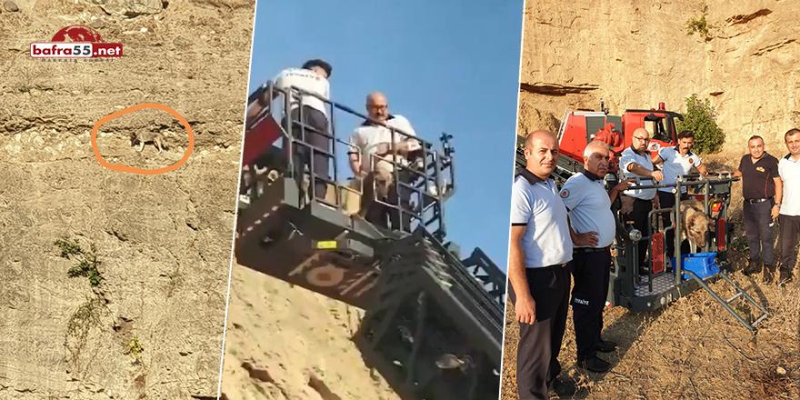 Dağ keçilerine taş çıkartan köpek için kurtarma operasyonu