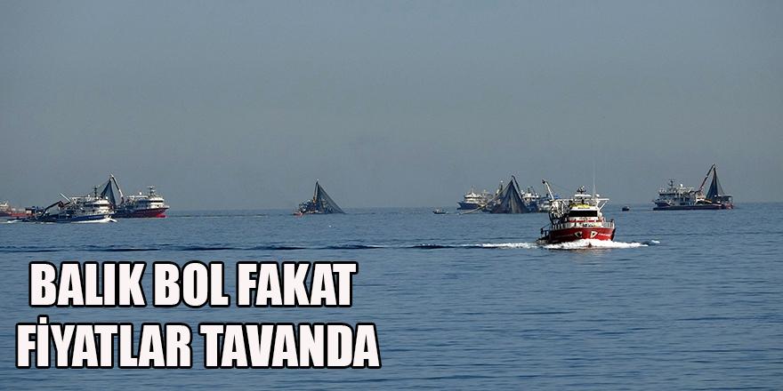 BALIK BOL FAKAT FİYATLAR TAVANDA