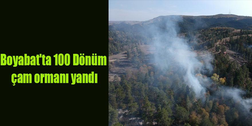 Boyabat'ta 100 Dönüm çam ormanı yandı