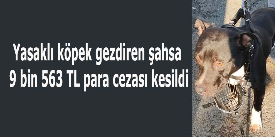 Yasaklı köpek gezdiren şahsa 9 bin 563 TL para cezası kesildi