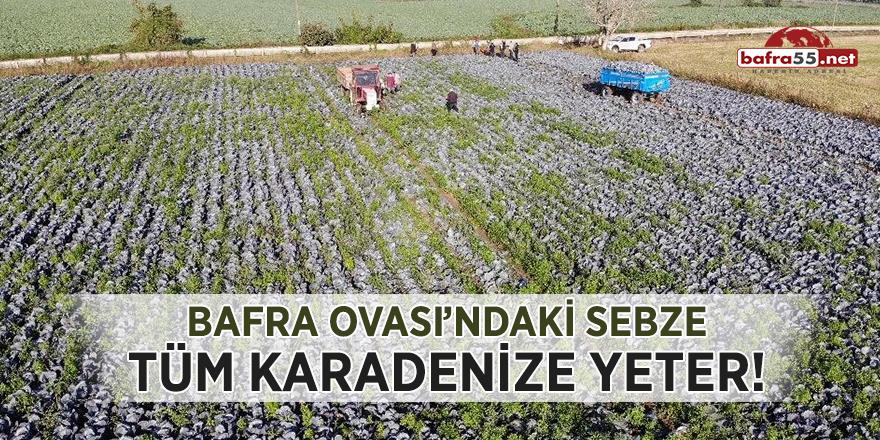 Bafra Ovası'ndaki sebze tüm Karadeniz'e yeter