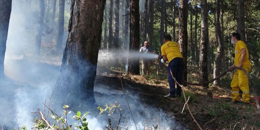 Çöp Yakarken Ağaçları Yakıyordu