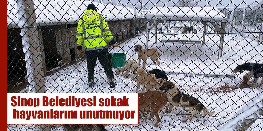 Sinop Belediyesi sokak hayvanlarını unutmuyor