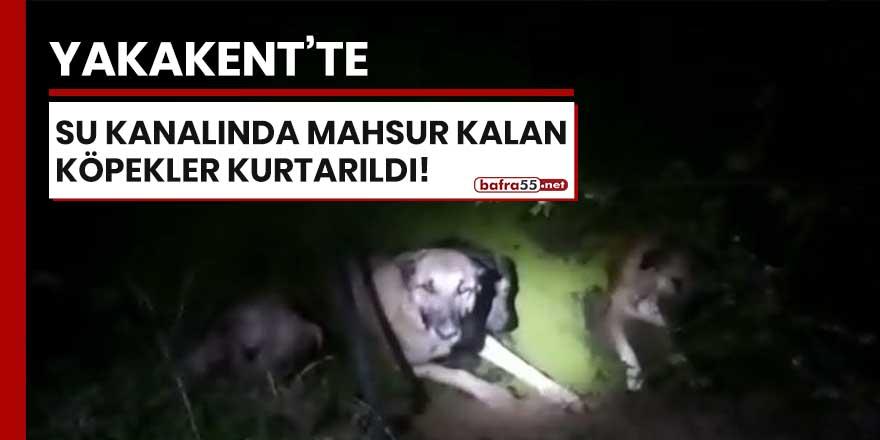 Yakakent'te su kanalında mahsur kalan köpekler kurtarıldı!