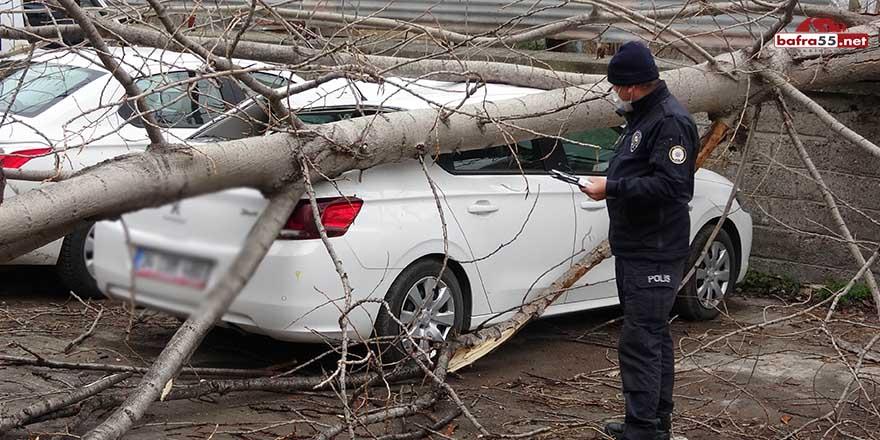 Samsun'da ağaç arabanın üzerine devrildi