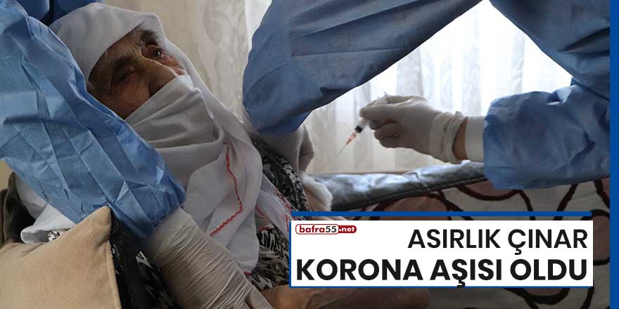 Samsun'da asırlık çınar korona aşısı oldu