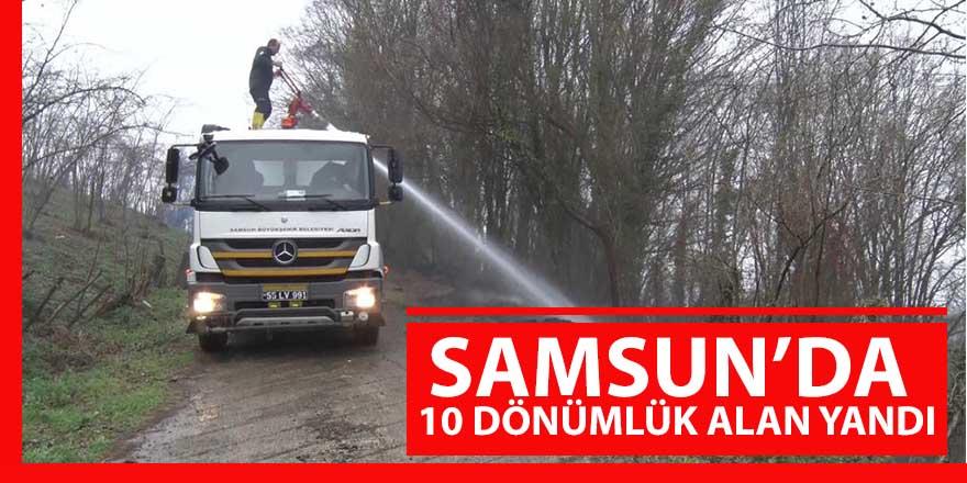 Samsun'da 10 dönümlük alan kül oldu