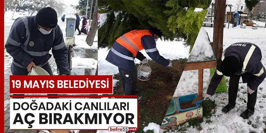 19 Mayıs Belediyesi doğadaki canlıları aç bırakmıyor