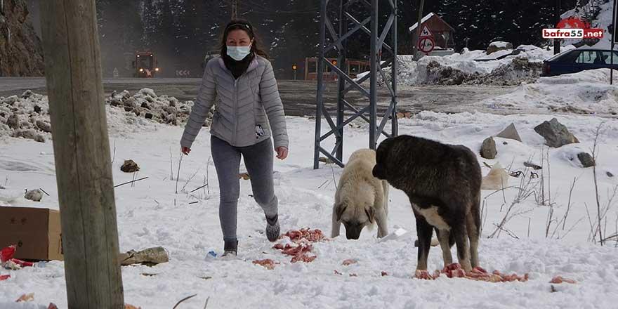 Her ay maaşının iki katını hayvanlar için harcıyor