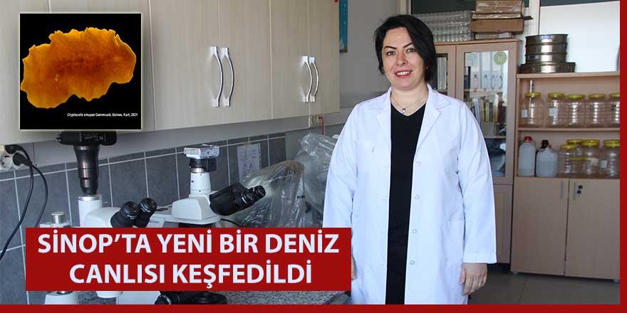 Sinop'ta yeni bir deniz canlısı keşfedildi