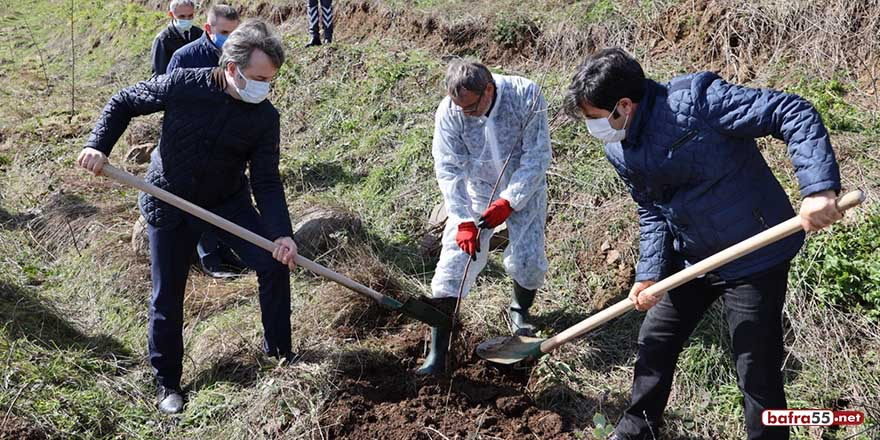 Meyve fidanları SAMÜ personelleri aracılığıyla toprakla buluştu
