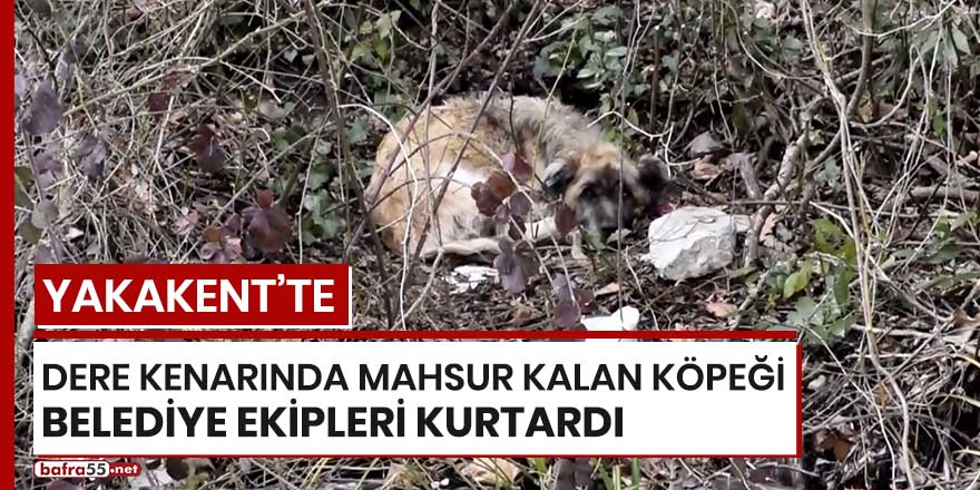 Yakakent'te dere kenarında mahsur kalan köpeği belediye ekipleri kurtardı