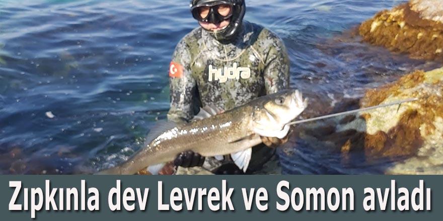 Zıpkınla dev Levrek ve Somon avladı