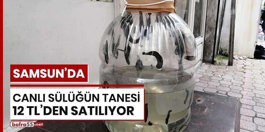 Samsun'da canlı sülüğün tanesi 12 TL'den satılıyor