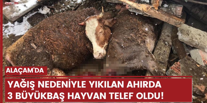 Alaçam'da yağış nedeniyle yıkılan ahırda 3 büyükbaş hayvan telef oldu